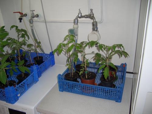 re tomaten gurken rund um saxonette spartamet und alles was zwei r der und. Black Bedroom Furniture Sets. Home Design Ideas